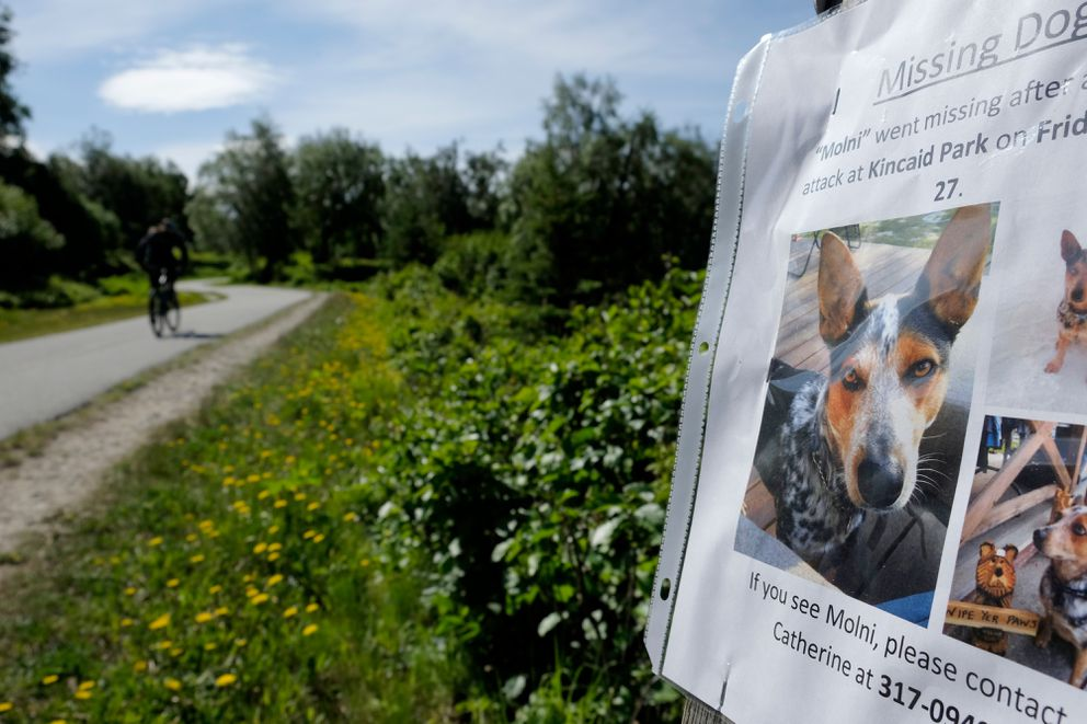 A notice posted along the Tony Knowles Coastal Trail in Kincaid Park for Catherine Dwinnell's lost dog, Molni, on Tuesday, May 31. (Marc Lester / Alaska Dispatch News)
