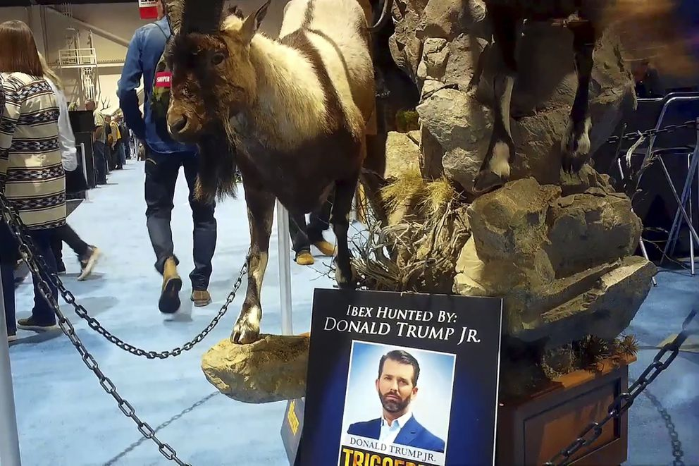 This file image from video provided by the Humane Society of the United States shows taxidermy hunted by Donald Trump Jr. at the Safari Club International's 2020 annual convention held in Reno, Nevada. (Humane Society of the United States via AP, File)
