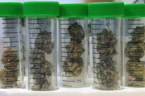 CannTest, the state's first marijuana testing lab, opened its doors on Monday morning, Oct. 24, 2016, and began testing the first commercial marijuana samples grown in Alaska. (Bill Roth / Alaska Dispatch News)