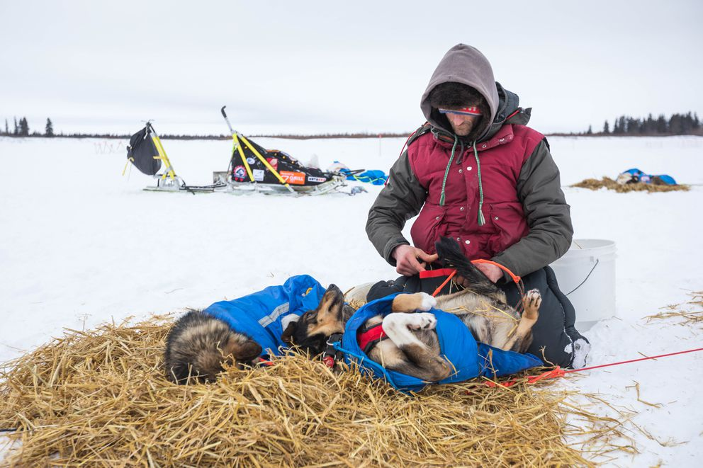 Nicolas Petit takes booties off his dogs after arriving in White Mountain on Tuesday. (Loren Holmes / ADN)