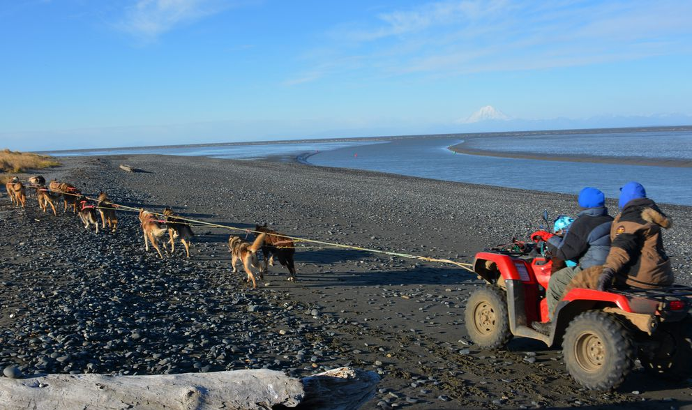 Joseph Robertia and his wife Colleen run some of their sled dogs along the shore of Cook Inlet — long after the dipnetters, setnetters and the thousands of other summer visitors have departed. (Joseph Robertia)