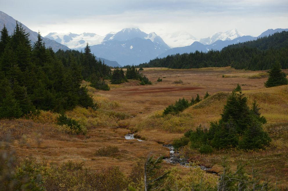 The high bench of land near Turnagain Pass is turning to colors of autumn Sept. 15, 2020. In the distance are the Chugach Mountains. (Anne Raup / ADN)