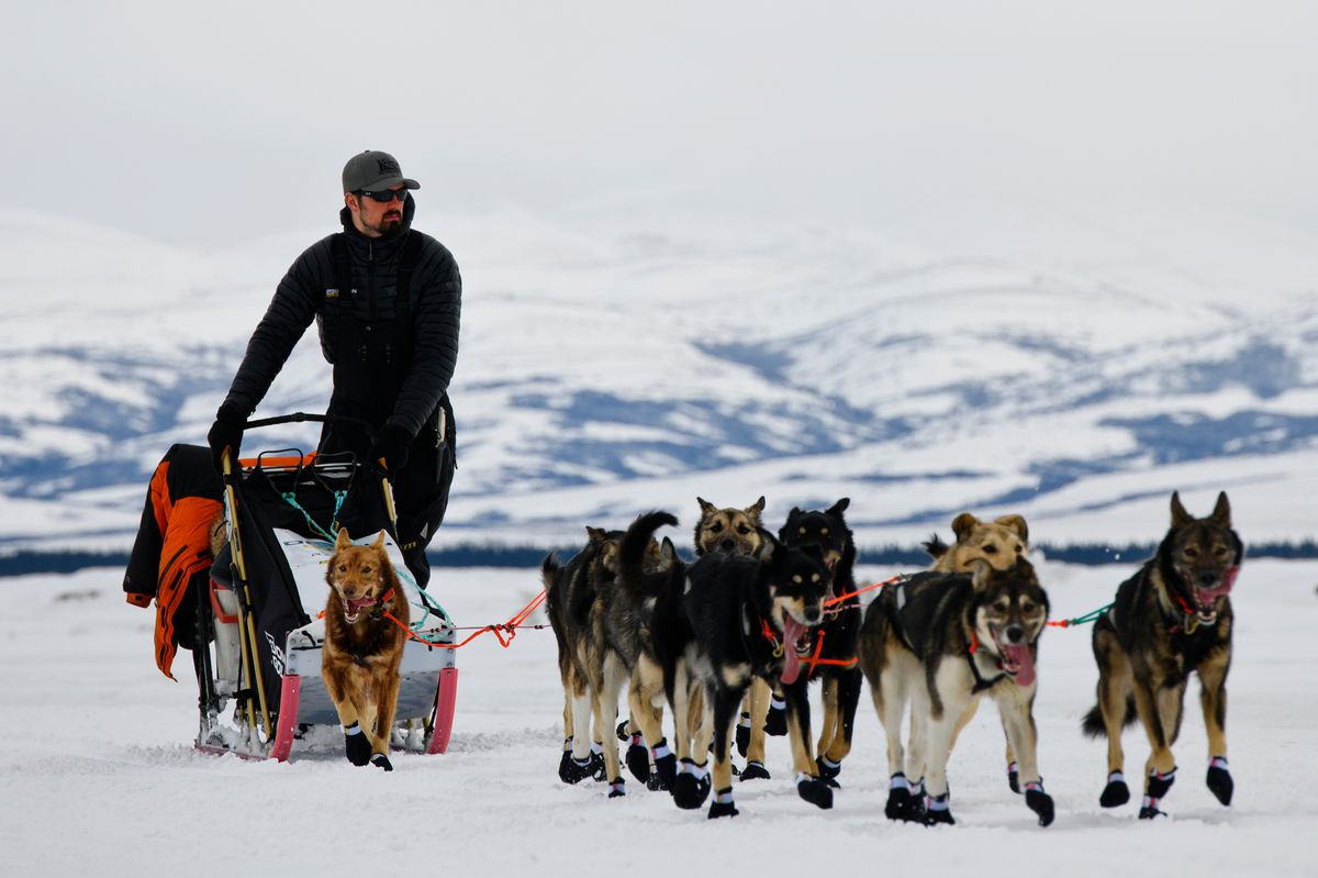 Peter Kaiser was the second musher to reach Unalakleet, followed closely behind by Joar Leifseth Ulsom and Jessie Royer on March 10, 2019. (Marc Lester / ADN)