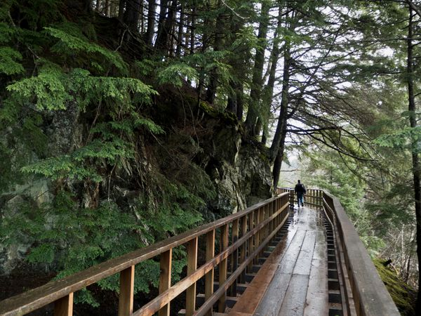 A pedestrian walks the Gold Creek Flume Trail on a soggy morning in Juneau. (Marc Lester / ADN)