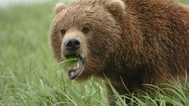 California man ordered to pay $13K for killing 2 bears out of season
