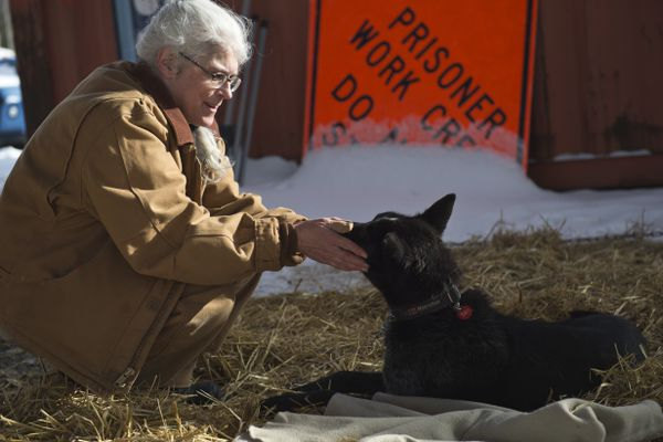 "Hiland inmate Reina Valley pets an Iditarod sled dog in her care. Several prisoners at Hiland Mountain Correctional Center have been caring for dogs dropped from the Iditarod Trail Sled Dog Race. Some of the dogs, who are flown to Anchorage International Airport, stop over at the Eagle River prison until handlers from the mushers' kennels can pick them up. ""We keep them fed. We hold them and make sure that they're comfortable,"" said Kim Dubie, and inmate who leads one of two teams that cares for the dogs. Several of the women involved call their involvement therapeutic. Reina Valley said being a part of the program rekindles a love of animals that she has missed while incarcerated. ""It's been a few years, so to get back into enjoying being around dogs is a blessing,"" Valley said. (Marc Lester / ADN)"
