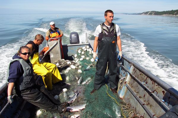 "Commercial setnetters are a major player in the allocation and management of salmon resources in Cook Inlet. Setnetters target sockeyes but catch significant numbers of king salmon in the process. These fishers have just finished picking fish and pulling their nets during an ""East Side"