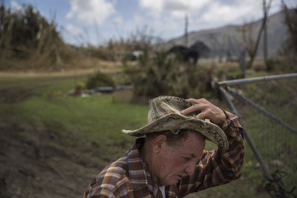 Felix Ortiz Delgado looks over the ruined nursery where he works as a foreman, in Yabucoa, Puerto Rico, Sept. 24, 2017. (Victor J. Blue/The New York Times)