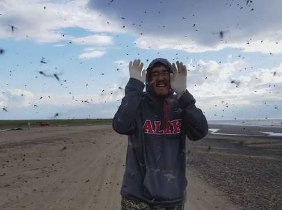 Video Fending Off An Epic Mosquito Swarm In The Arctic Anchorage