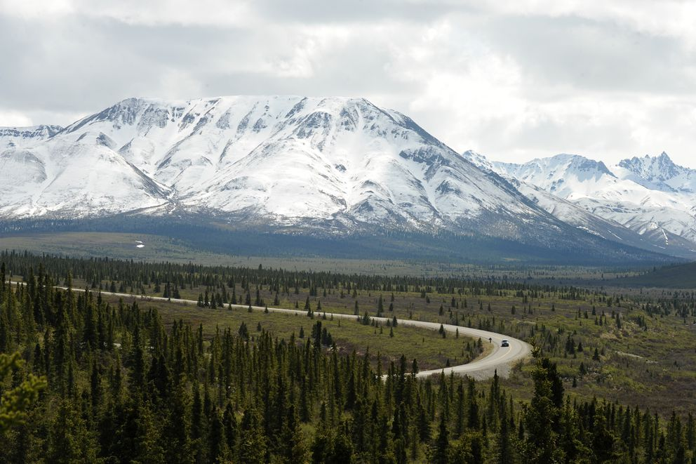 A car drives down the park road as the foothills of the Alaska Range rise in the background in Denali National Park and Preserve on Wednesday, May 18, 2016. (Bob Hallinen / Alaska Dispatch News)