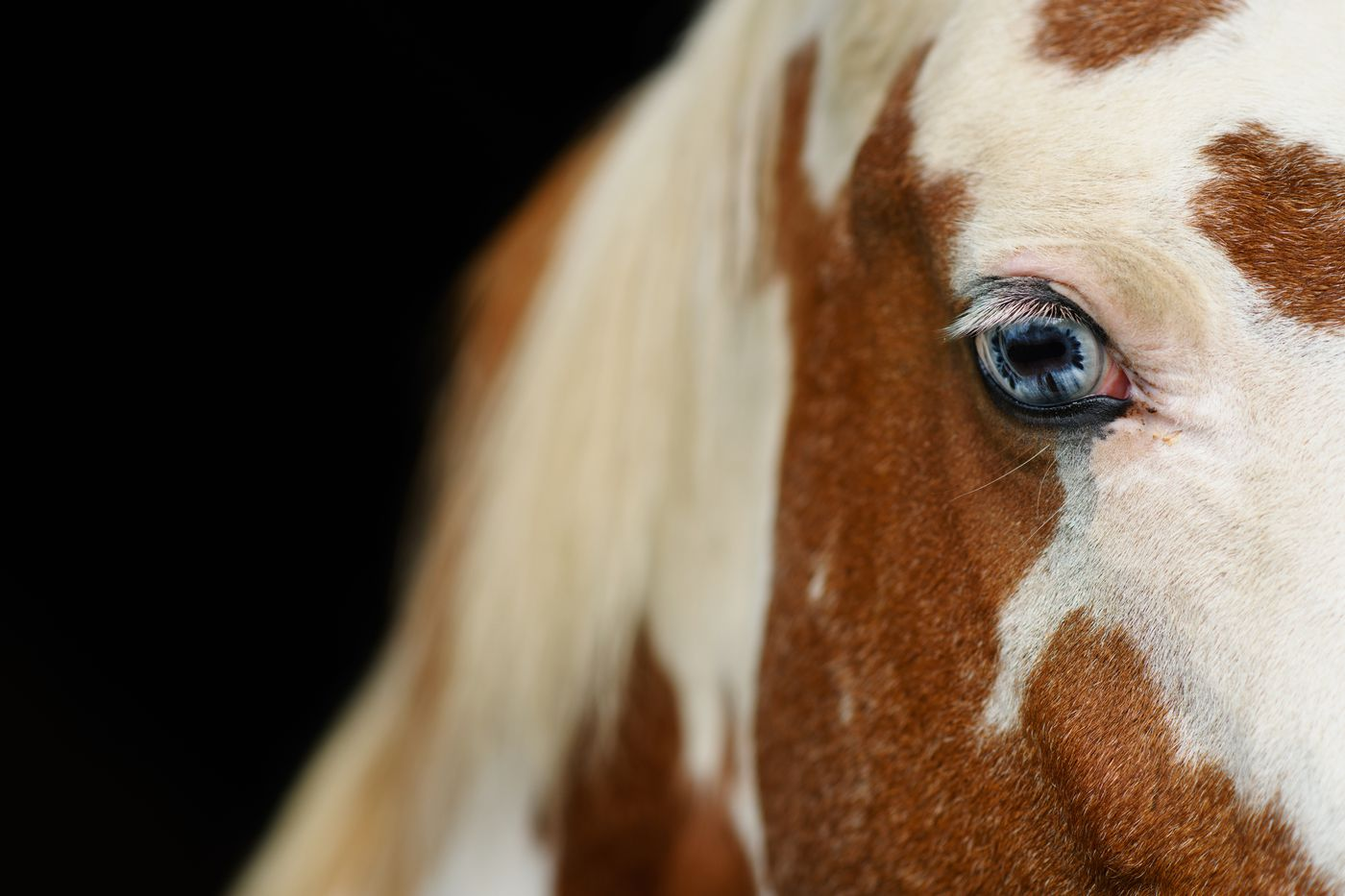 Candy, a horse owned by Brooke Wright, looks out from the stables. (Marc Lester / ADN)