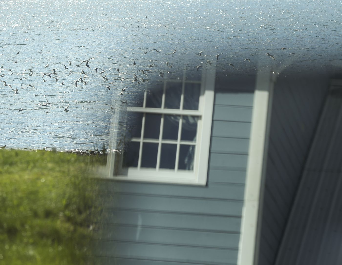 Seagulls flock Orca Inlet in Cordova as Orca Adventure Lodge is reflected in a car's side mirror on Saturday, May 22, 2021. (Emily Mesner / ADN)