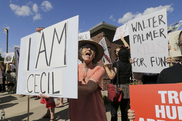 In this July 29, 2015, file photo, protestors gather outside Dr. Walter James Palmer's dental office in Bloomington, Minn. Palmer killed Cecil, a black-maned lion, just outside Hwange National Park in Zimbabwe. Palmer participated in an interview Sunday, Sept. 6, in which he disputed some accounts of the hunt, expressed agitation at the animosity directed at those close to him and said he would be back at work within days.
