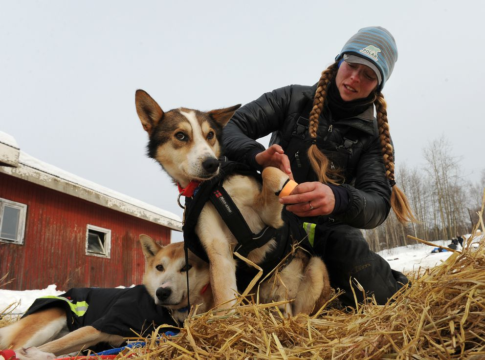 Kristy Berington works with her dogs Dingo and Lobo at the Ruby checkpoint during the 2017 Iditarod. (Bob Hallinen / ADN archive)