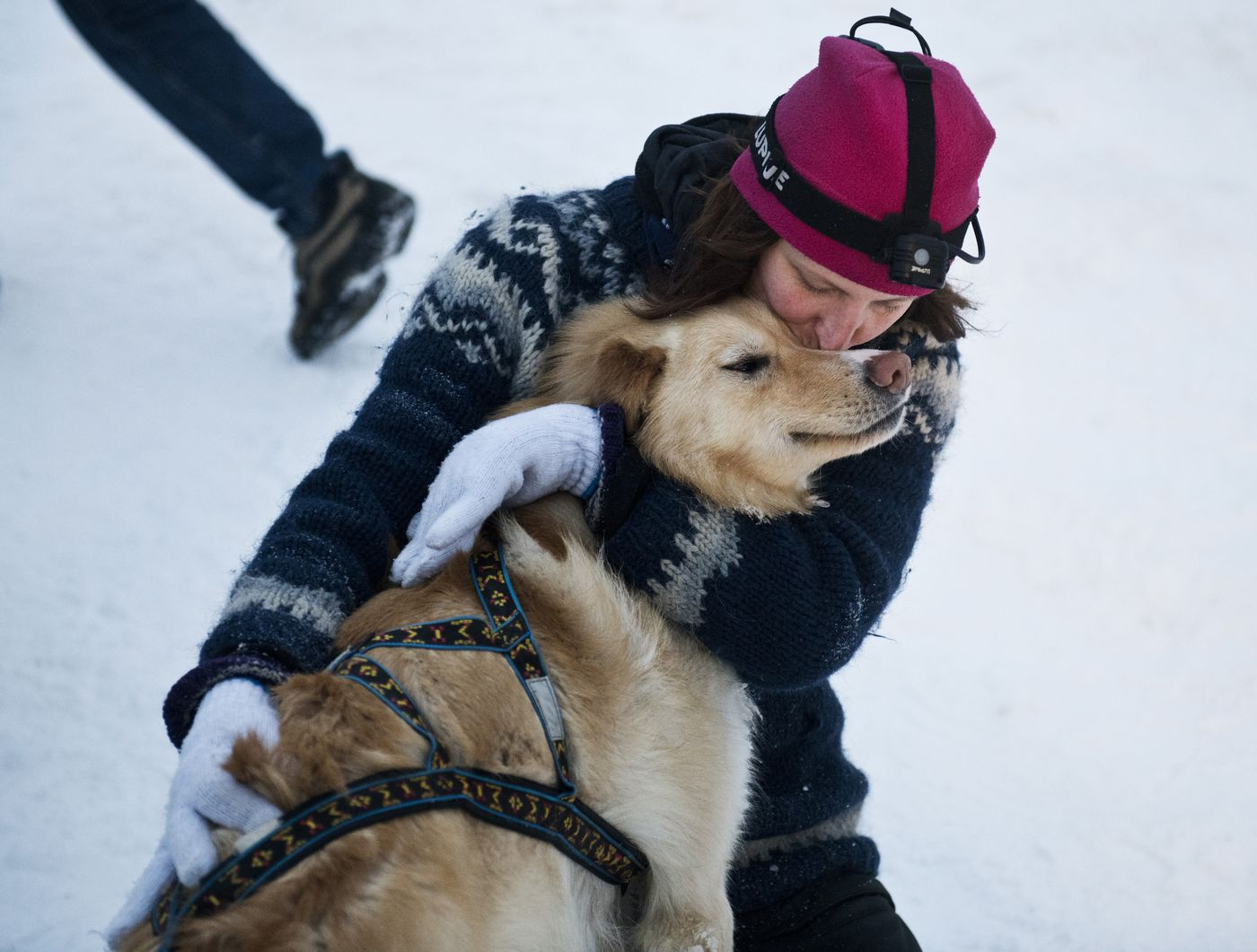 Ida Mortensen kisses one of Brent Sass's dogs after they finished the Iditarod Trail Sled Dog Race. (Marc Lester / ADN)