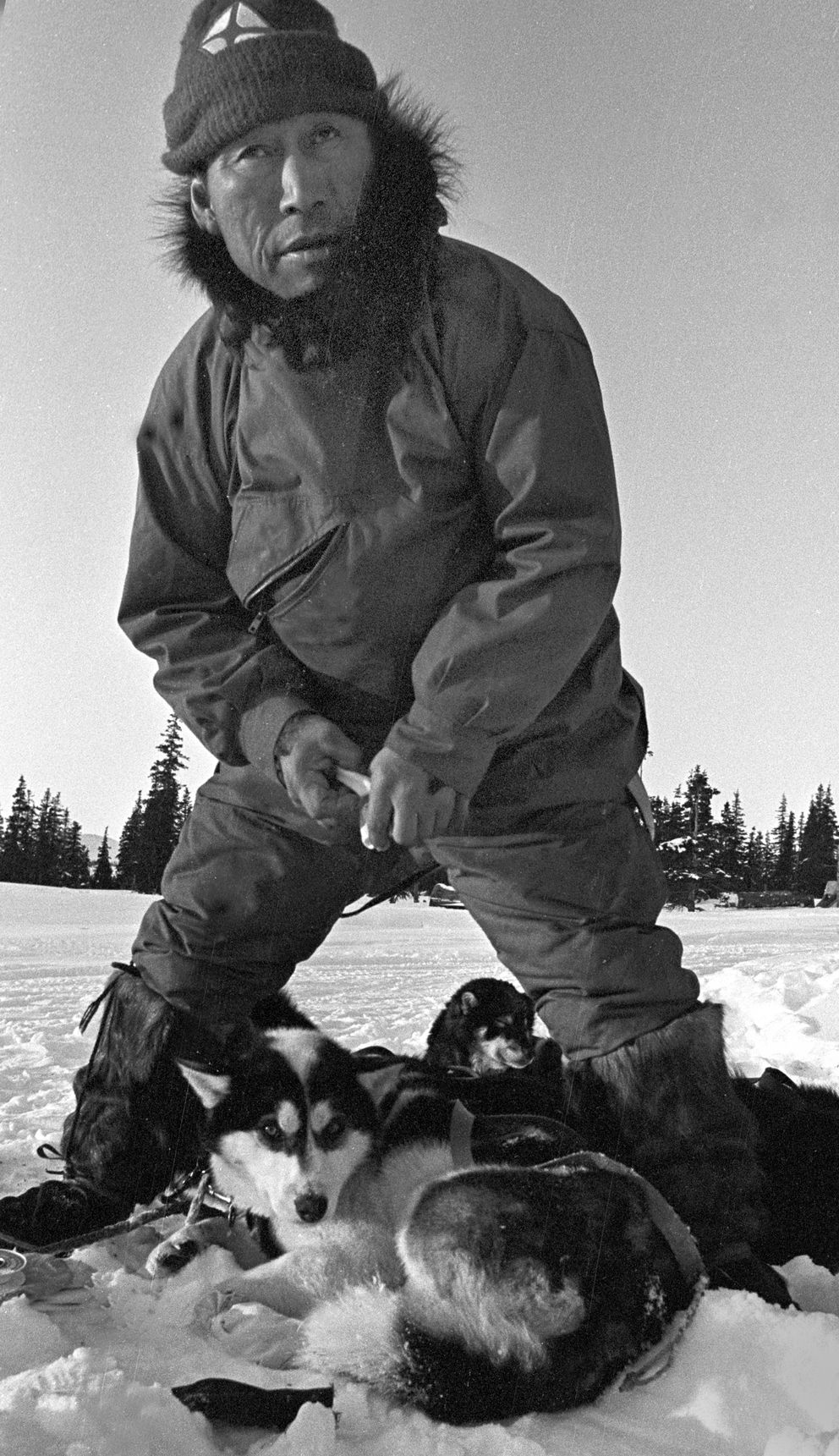 At the Elim checkpoint in the 1980 Iditarod Sled Dog Race, Herbie Nayokpuk tended to his dogs. Herbie went on to finish second in that year's race. (Fran Durner / ADN archive 1980)