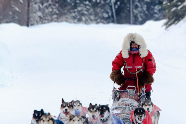 Ed Hopkins of Canada drives his dog team towards a third-place finish in the Yukon Quest, his highest ever.