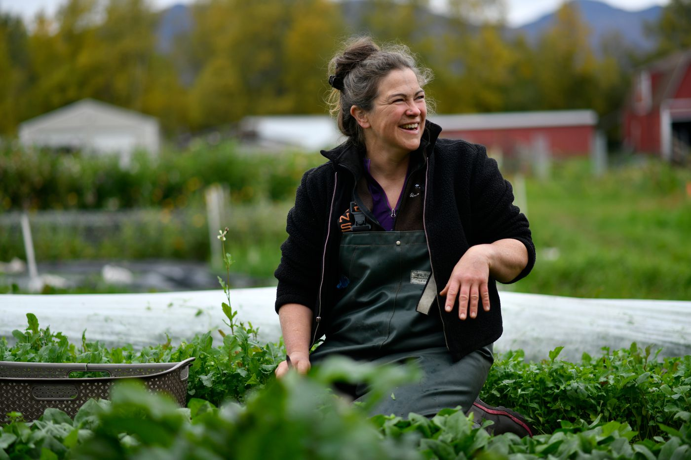 Anne-Corinne Kell harvests spinach at Sun Circle Farm in Palmer on September 17, 2020. (Marc Lester / ADN)
