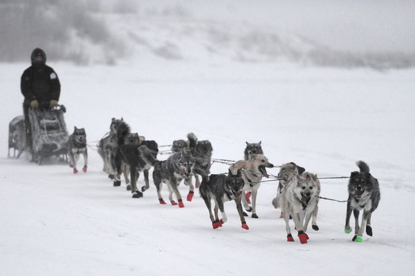 Musher Richie Diehl crosses the Aniak Slough during a training run on Wednesday, Jan. 11, 2017, as he prepares his dog team for the upcoming Kuskokwim 300. (Bill Roth / Alaska Dispatch News)