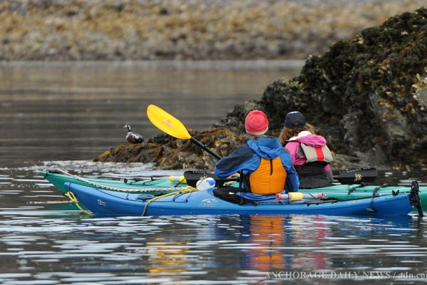 Kayakers on a True North Kayaks tour near Elephant Rock across Kachemak Bay from the Homer Spit paddle by a Harlequin Duck on Friday, May 10, 2013 Friday is the Second day of the Homer Shore Bird Festival.