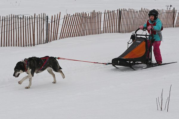 Sparrow Engler-Soares and Romeo sprint to the finish during the Alaskan Sled Dog and Racing Association Junior World Championships at Tozier Track on Sunday, Feb. 21, 2021. (Bill Roth / ADN)