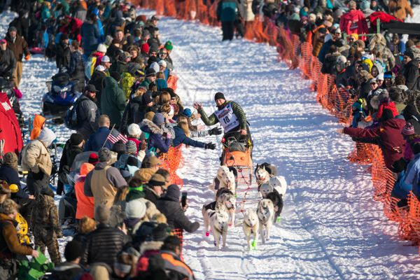 Rob Cooke high-fives race fans as he mushes across Willow Lake during the start of the Iditarod Trail Sled Dog Race Sunday, March 4, 2018 in Willow. (Loren Holmes / ADN)