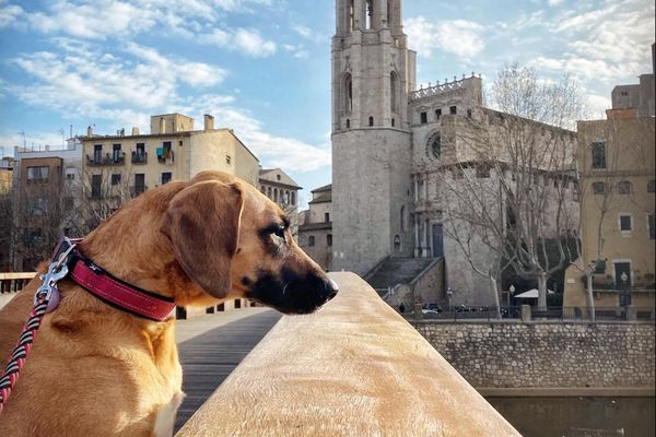Walking the dog, Neska, while the whole town of Girona is on lockdown due to the coronavirus. (Photo by Tracy Harris-Inman)