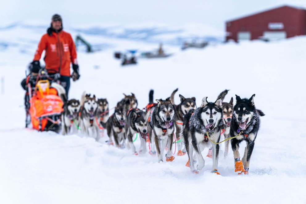 Thomas Waerner mushes into Unalakleet after a 12-hour overnight run from Kaltag during the 2020 Iditarod. (Loren Holmes / ADN)