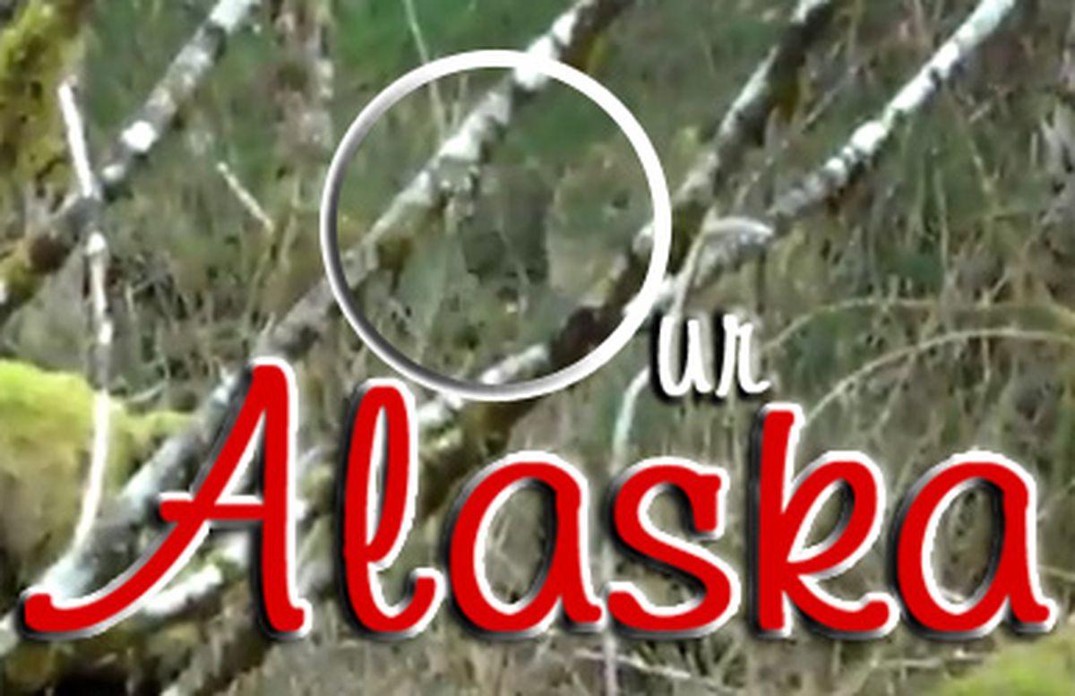 Our Alaska: Bigfoot sighting in Ketchikan? - Anchorage Daily
