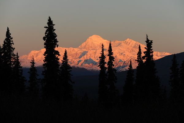 Denali is lit by the rising sun and framed by spruce trees in this view from the Parks Highway on Monday, Sept. 22, 2014. (Bob Hallinen / ADN)