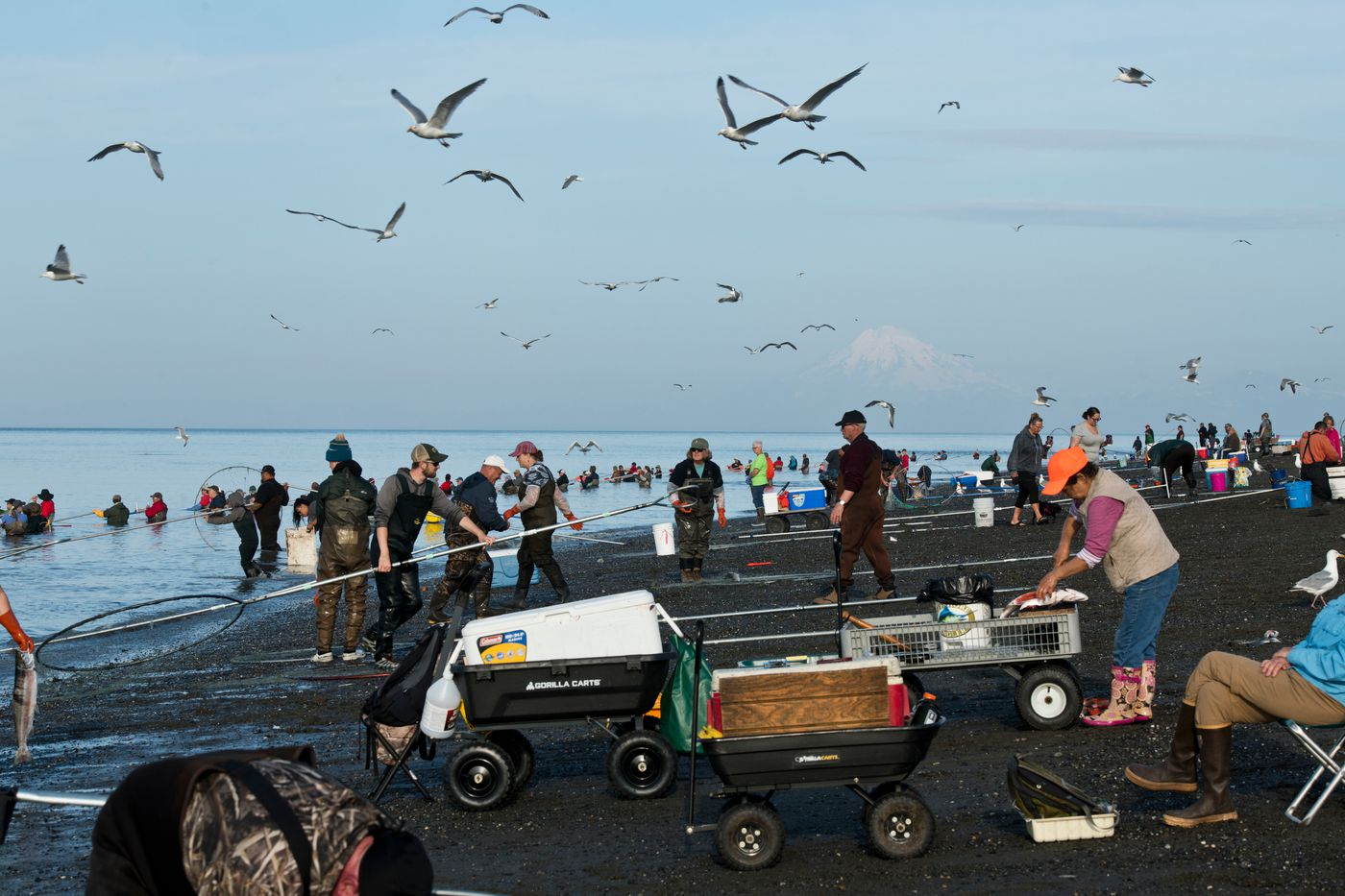 Several hundred Alaskans gathered at the mouth of the Kenai River to dipnet for sockeye salmon on July 18, 2019. (Marc Lester / ADN)