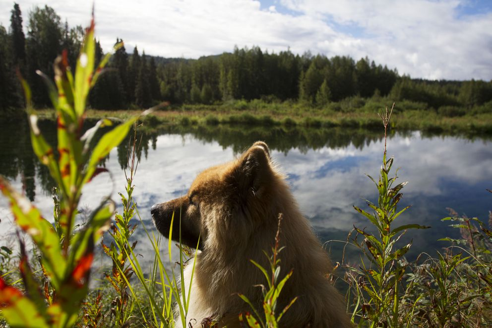 Coda sits in the first rays of sunshine the area had seen in days on Shannon Cartwright's property on Monday, August 8, 2016.