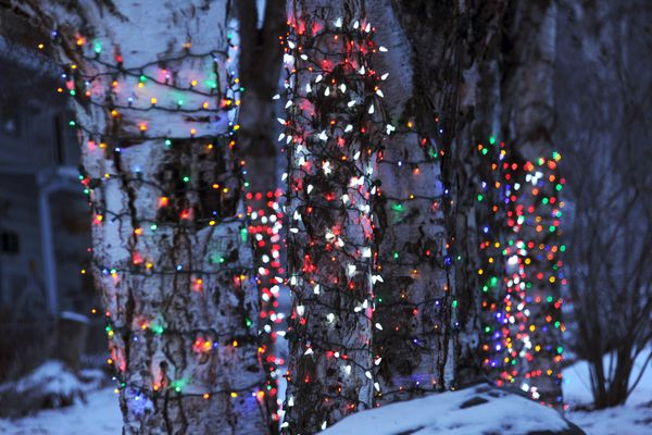 Birch trees glow with holiday lighting late Tuesday afternoon, December 22, 2015, on O Street at West 15th Avenue. (Erik Hill / ADN archive)