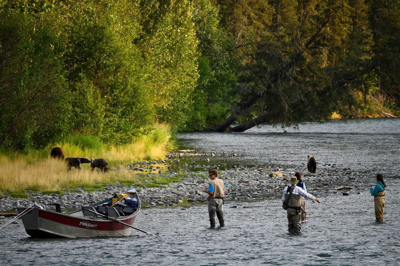Fisherman keep an eye on a brown bear sow and three cubs on the south bank of the Kenai River on July 30, 2020. (Marc Lester / ADN)