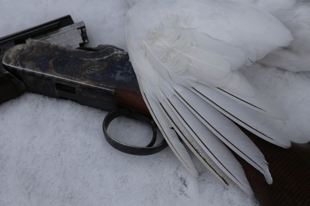 A white-tailed ptarmigan wing and an over/under shotgun pictured on a hunt in the Kenai Mountains. (Photo by Steve Meyer)