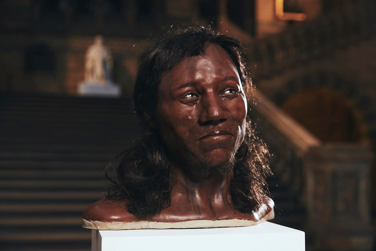 "A likeness of ""Cheddar Man,"" Britain's oldest known near-complete human skeleton, is seen at the Natural History Museum. Tom Barnes/Channel 4 handout via REUTERS"
