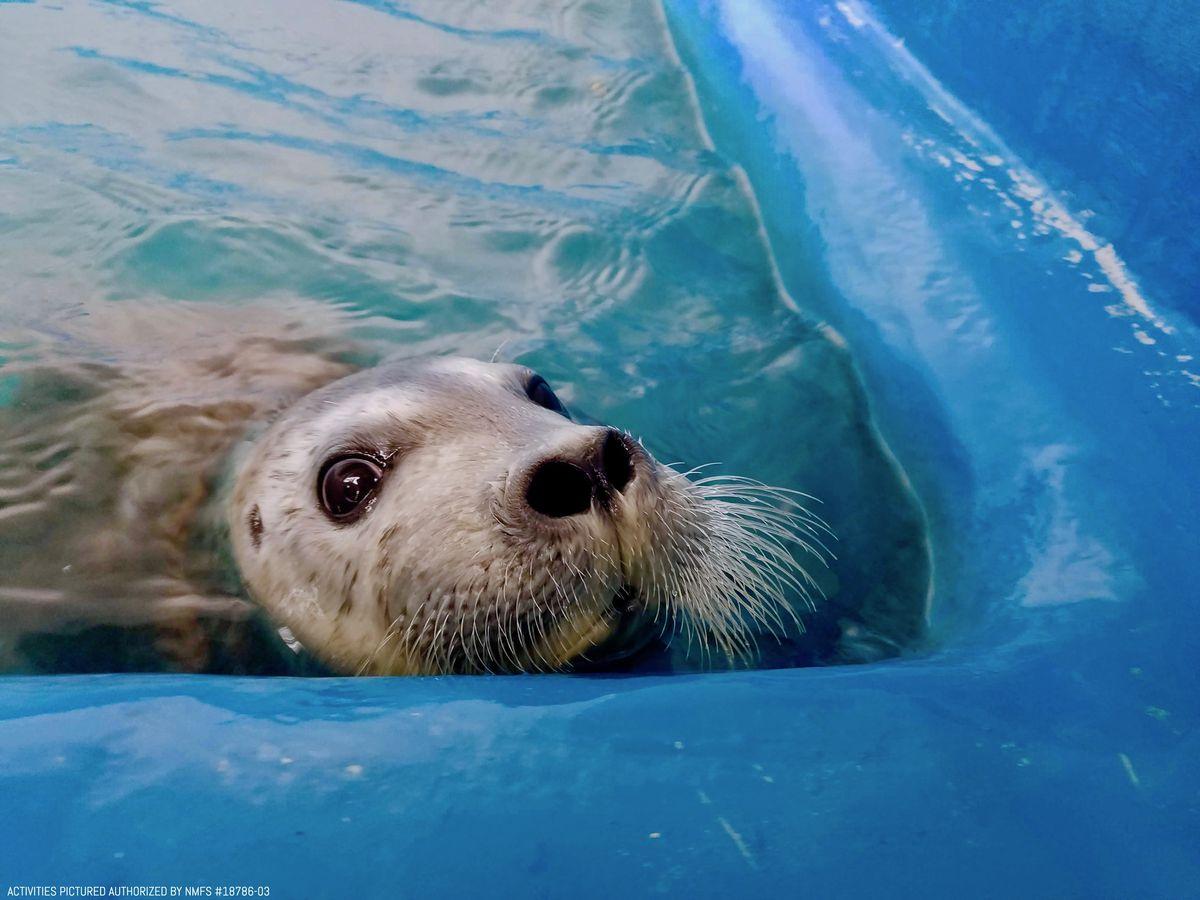 Image result for alaska sealife center
