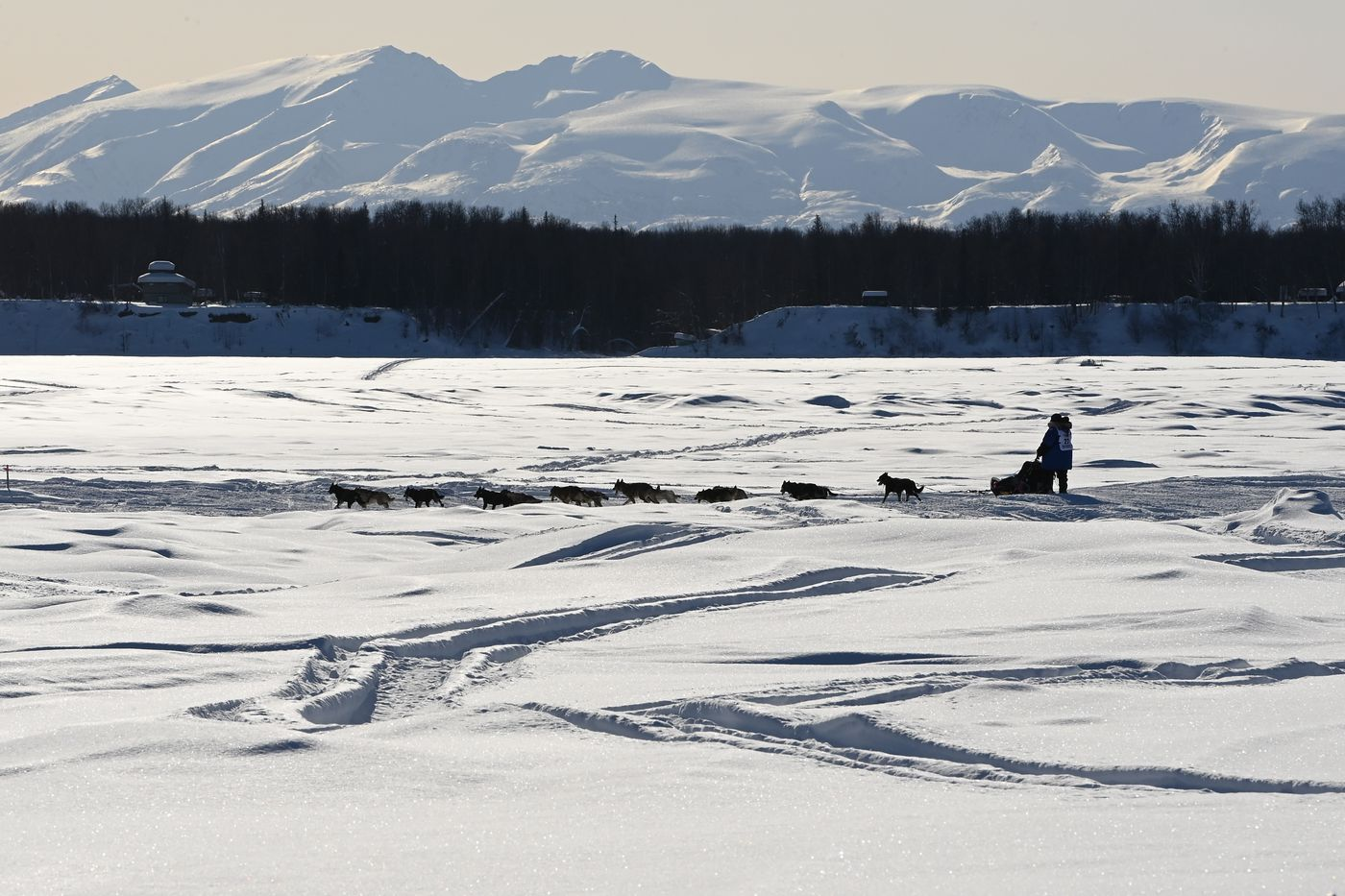 Iditarod rookie Will Troshynski travels down the Susitna River at the beginning of the Iditarod Trail Sled Dog Race on Sunday, March 7. (Bill Roth / ADN)