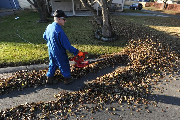 Tom Parmer helped clear leaves for a neighbor in the Turnagain Heights subdivision on a sunny Wednesday afternoon, Oct. 30, 2019. (Bill Roth / ADN)