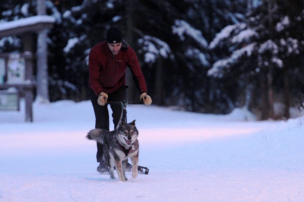Tonio Verzone and his dog Newtok do some kicksledding on the Hillside trail system on Thursday, Dec. 29, near Hilltop Ski Area. (Erik Hill / Alaska Dispatch News)