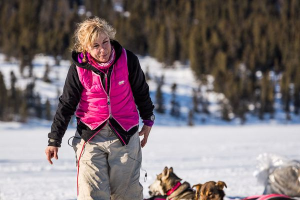 DeeDee Jonrowe takes care of her dogs at the Rainy Pass checkpoint in the 2014 Iditarod.