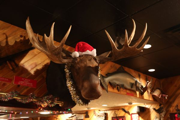 The moose head mount located at Louie's restaaurant in Kenai. (Steve Meyer)