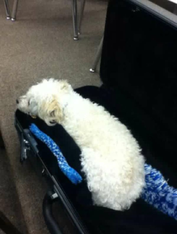 Jack rests in the saxaphone case. (Photo provided by Kim Kowalski-Rogers)