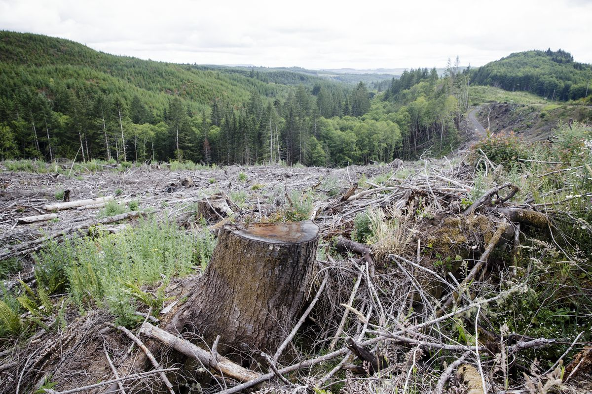 Clearcut forests along Highway 30 near Portland, Ore., June 24, 2016. Small, private forests, which make up more than half of the forestland in the United States, can be turned into potent weapons against climate change. (Leah Nash/The New York Times)