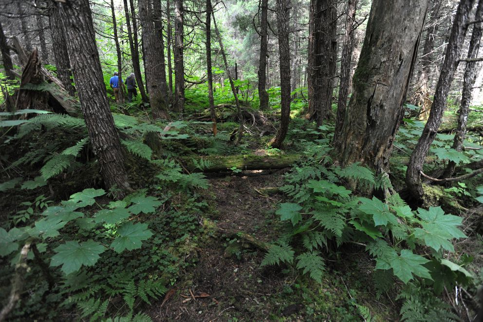Girdwood residents explore the proposed cemetery site off Crow Creek Road on Sunday. (Bill Roth / Alaska Dispatch News)
