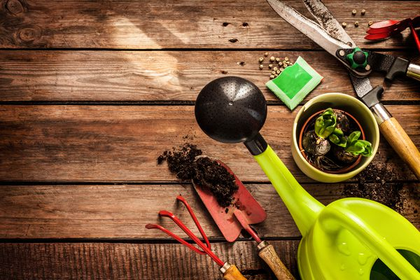 Gardening tools, watering can, seeds, plants and soil on vintage wooden table. Spring in the garden concept background with free text space. (Thinkstock)