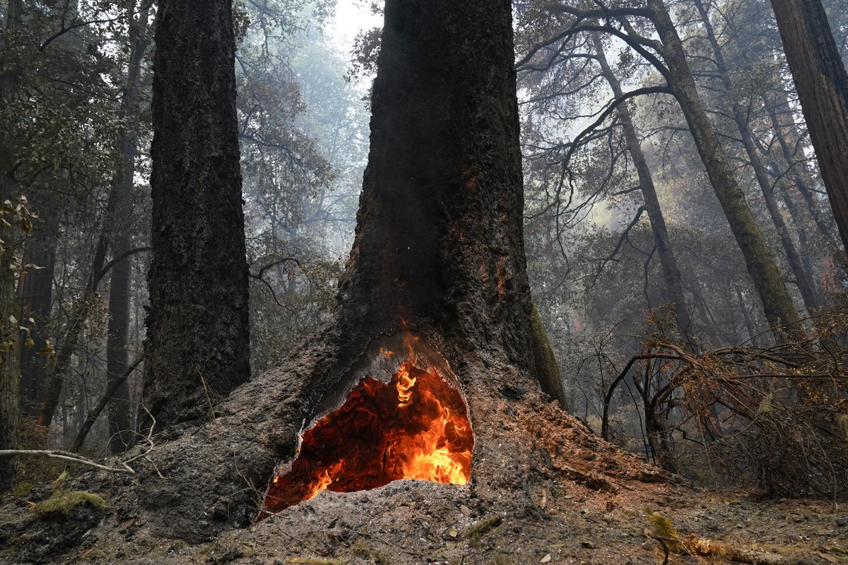 FILE - In this Aug. 24, 2020, file photo, fire burns in the hollow of an old-growth redwood tree in Big Basin Redwoods State Park, Calif. The CZU Lightning Complex wildfire tore through the park but most of the redwoods, some as old as 2,000 years, were still standing. (AP Photo/Marcio Jose Sanchez, File)