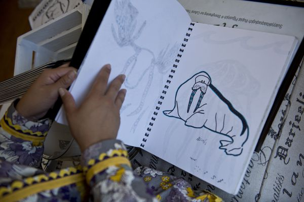 A sketch of a walrus is one of the drawings that will be included in the coloring book. Britt'nee Kivliqtaruq Brower is working on creating a coloring book of animals and their Inupiaq names. Photographed in her Anchorage home on August 4, 2017. (Marc Lester / Alaska Dispatch News)