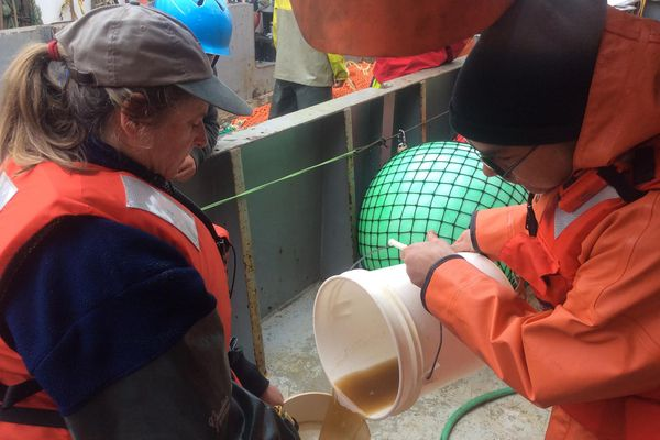In this undated handout photo provided by NOAA Fisheries, NOAA researchers pour a sample of sea water containing a brownish toxic algae into a jar aboard a research vessel off the Washington coast.
