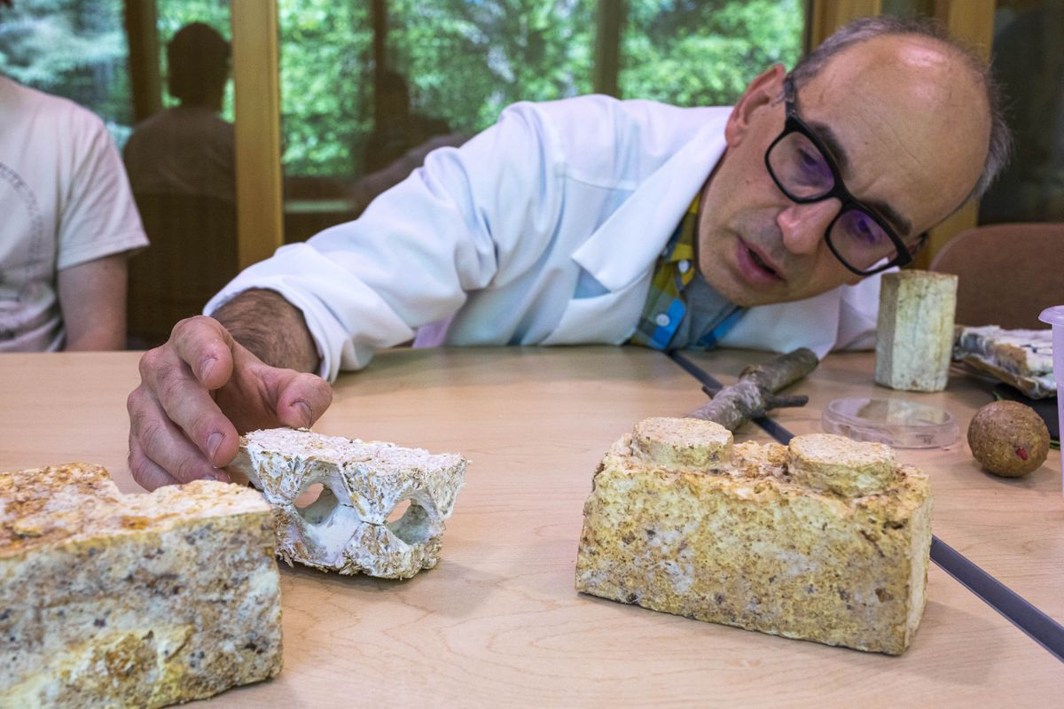 Dr. Philippe Amstislavski with samples of insulation made from fungi, in his lab at the University of Alaska Anchorage on June 21, 2019. Amstislavski is a co-founder of Rhizoform, a biomaterials company. (Loren Holmes / ADN)